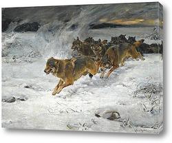 Два арктических волка
