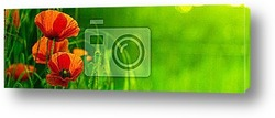 Постер Bandeau horizontal vert et fleur rouge - nature et coquelicot