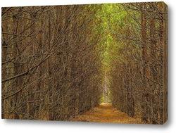 Постер Лесной тоннель