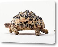 Постер Turtle018