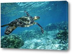 turtle014