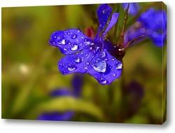 Постер цветение после дождя весной