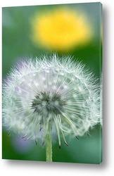 Abflug / Flugschirme der Pustblume beim Start