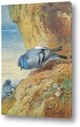 Постер Голуби на скалах