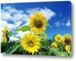 Г©nergie solaire, fleurs de tournesol fond de ciel bleu et solei