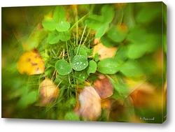 Постер Капли дождя на зелёных листьях
