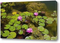 Постер Розовые кувшинки в пруду