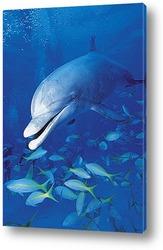 dolphin015