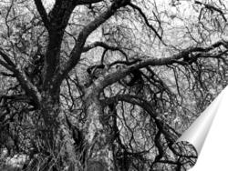 Постер Дерево жизни / Tree of Life