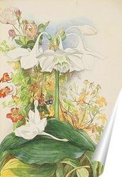 Постер Лилии и розы у крыльца.