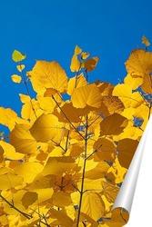 Постер Кленовые листья на фоне голубого неба