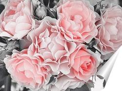 Постер Нежные розы