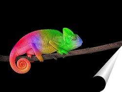 Постер Радужный хамелеон
