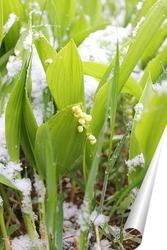 Постер ландыши в снегу