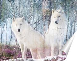 Постер Белоснежные волки