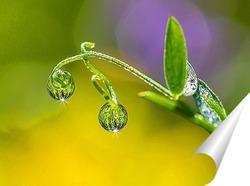 Постер Капли утренней росы на стебле травы