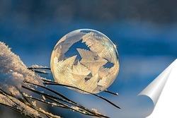 Постер Замёрзший мыльный пузырь на ветке сосны