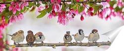 Постер птицы в мае