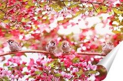 Постер в цветущем саду