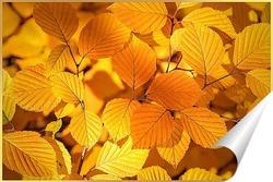 Постер Красивые, жёлтые, осенние листья деревьев