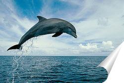 Постер Dolphin090