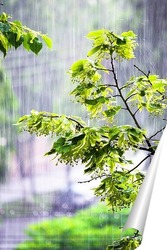 Постер Весенний дождь