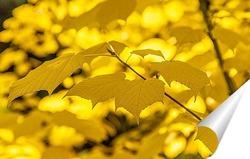Постер Ветвь клёна с яркими, красочными, жёлтыми листьями
