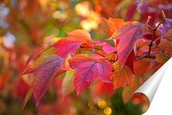 Постер Яркие , осенние листья клёна