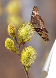 Постер Бабочка на ветке вербы