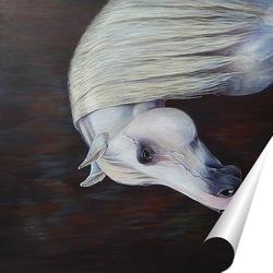Постер Белая лошадь.