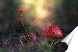 Постер грибы 2