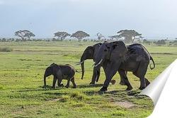 Постер семья слонов