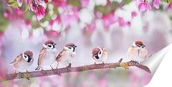 Постер птицы в саду