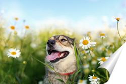 Постер собака на лугу