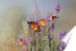 Постер Бабочки - Цветочки
