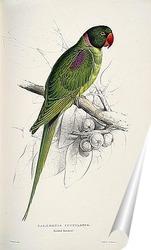 Постер Попугай с капюшоном