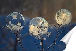 Постер Три мыльных пузыря на сухом растении