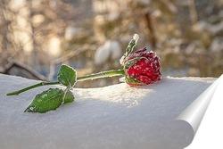 Постер Роза на снегу