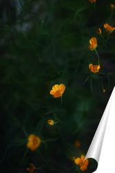 Постер Лютики цветочки