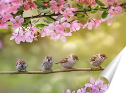 Постер воробьи в цветах яблони
