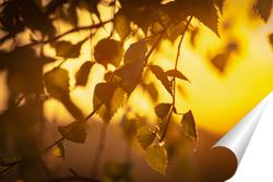 """Постер """"Лучи закатного солнца купаются в листьях березы""""."""