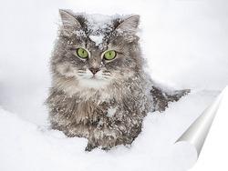 Постер В снежном плену