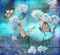 Бабочки и сакура