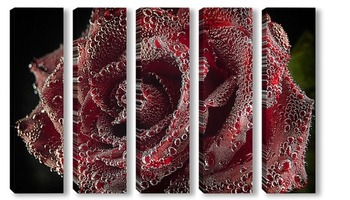 Модульная картина Бутон розы в воде