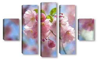 Модульная картина цветущая вишня