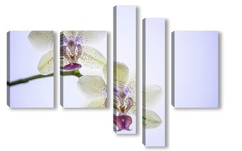Модульная картина Порхающие цветы- бабочки