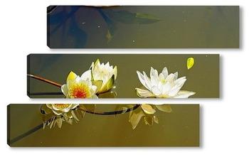 Модульная картина Лилии на воде