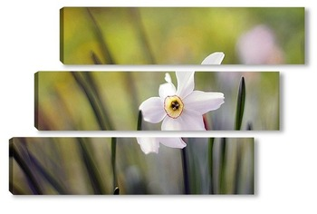 Модульная картина Нарцисс