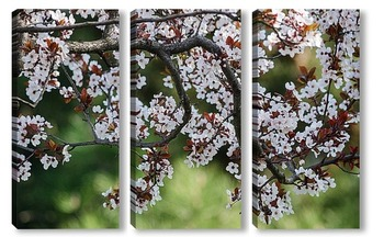 Модульная картина Ветка цветущей сакуры