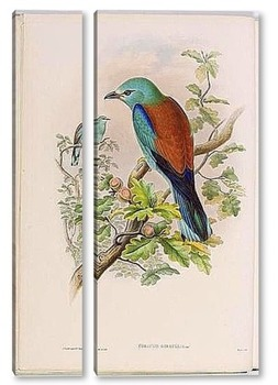 Модульная картина Птицы Великобритании